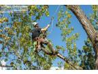 Find the best Tree Services in Ficko
