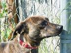 Boat Mountain Mountain Cur Young Male