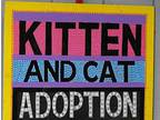 Open Adoption Spectacular!! Siamese Kitten Female
