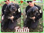 Faith Poodle (Standard) Adult Female