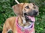 CGC Valerie Mountain Cur Adult Female