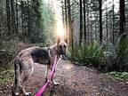 Lucas German Shepherd Dog Adult Male