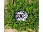 Black and White Dragon Eye Refridgerator Magnet
