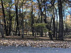 Plot For Sale In Crossville, Tennessee