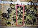 North Port, uncleared lot with an RMF3 zoning!!