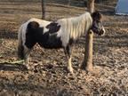 Leadline pony loud black and white