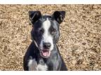 Adopt Josie a Border Collie / Mixed dog in Napa, CA (27540859)