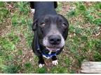 Adopt Benny a Black Mixed Breed (Medium) / Mixed dog in Fredericksburg