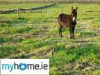 Bungalow For Sale In Cloonfad, Roscommon