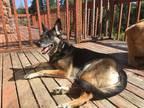 Adopt Rita A Black - With Tan, Yellow Or Fawn German Shepherd Dog / Mixed Dog In