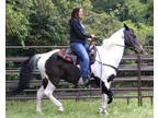 Black and white paint mare
