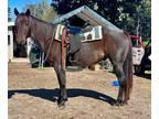 Cowboy Sensible Exceptionally Colored Quarter Horse