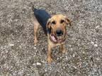 Adopt Georgia a Coonhound