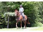 Hunter Paces, Jumping, Endurance,Fox Hunts-Forward Ride without the stupid