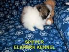 Spiffer