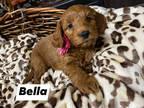 Mini Bella