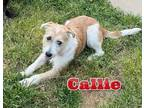 Adopt Callie a Terrier (Unknown Type, Medium) / Mixed dog in Brookeville