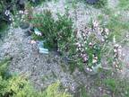 Trees, Shrubs, Tomato Plants, and Lawn Mowers **