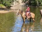 Registered Buckskin Quarter Horse Gelding