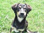 Adopt Hazel a Black Mixed Breed (Large) / Mixed dog in Gainesville