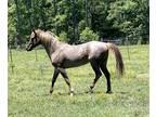 Easy Going Stallion