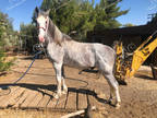 Gorgeous, gray TWH is super smooth, stylish, fancy & moves beautifully
