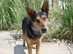 BACARDI German Shepherd Dog Young Male