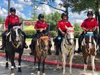 Looking for mounted patrol horses and riders