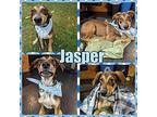 Jasper Mixed Breed (Medium) Male