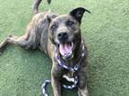 Adopt JOEY a Mixed Breed